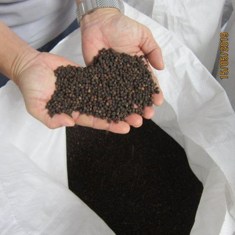 USA – THE LARGEST MARKET OF VIETNAMESE BLACK PEPPER