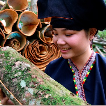CINNAMON STORY WITH MOUTAIN PEOPLE