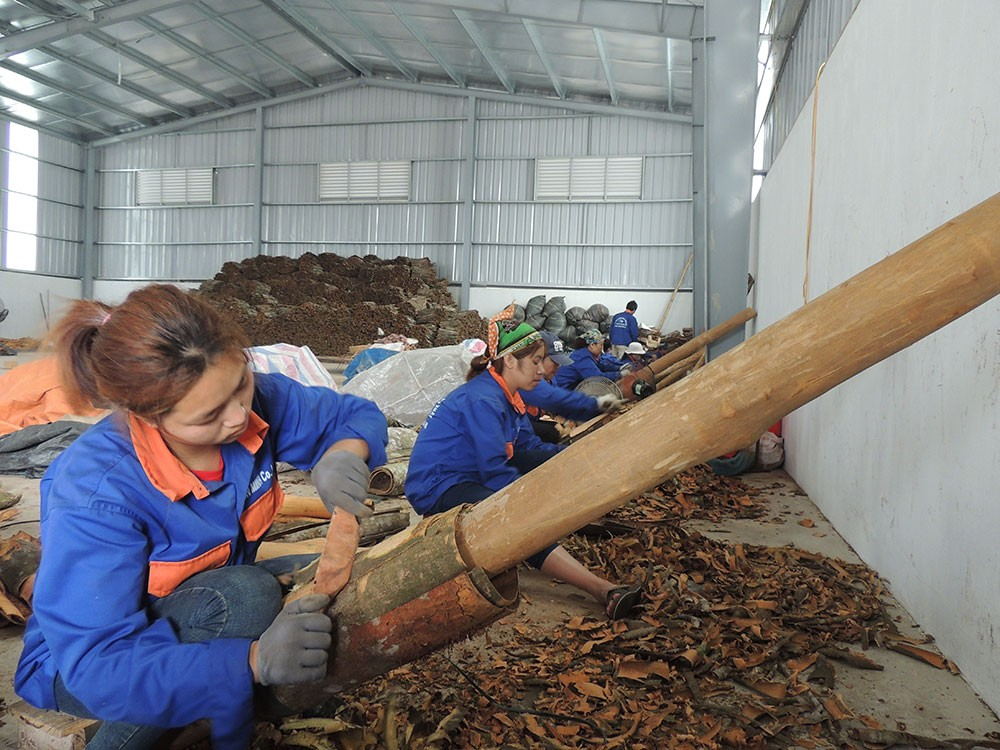 supplier cinnamon stick in Vietnam, cinnamon powder