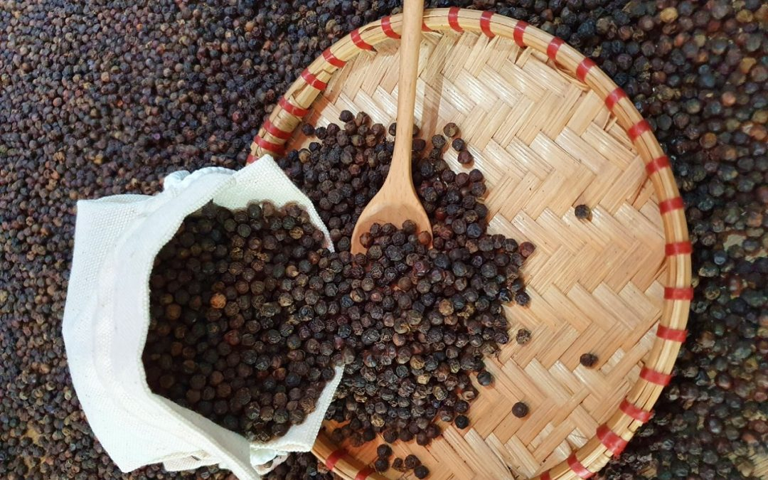 NEW CROP OF VIETNAM BLACK PEPPER